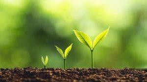 Individual Habit Coaching Small Seedlings Growing